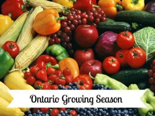Ontario Fruit & Vegetable Season Growing