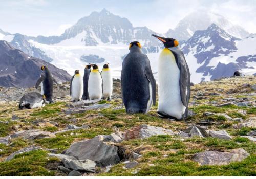 Antartica Penguins