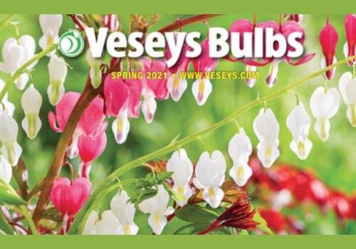 Versey FREE Catalogue