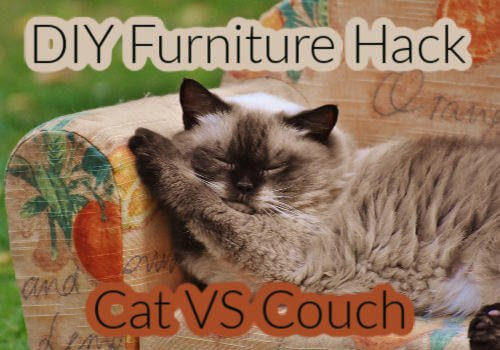 How to Fix Cat Scratches on Furniture (DIY)
