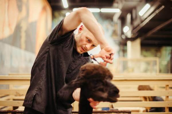 how to cut dogs hair ( diy)