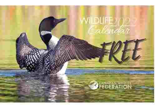 Free Wildlife Calendar